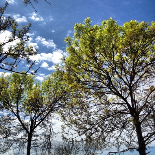 Blue skies and green tree brenches