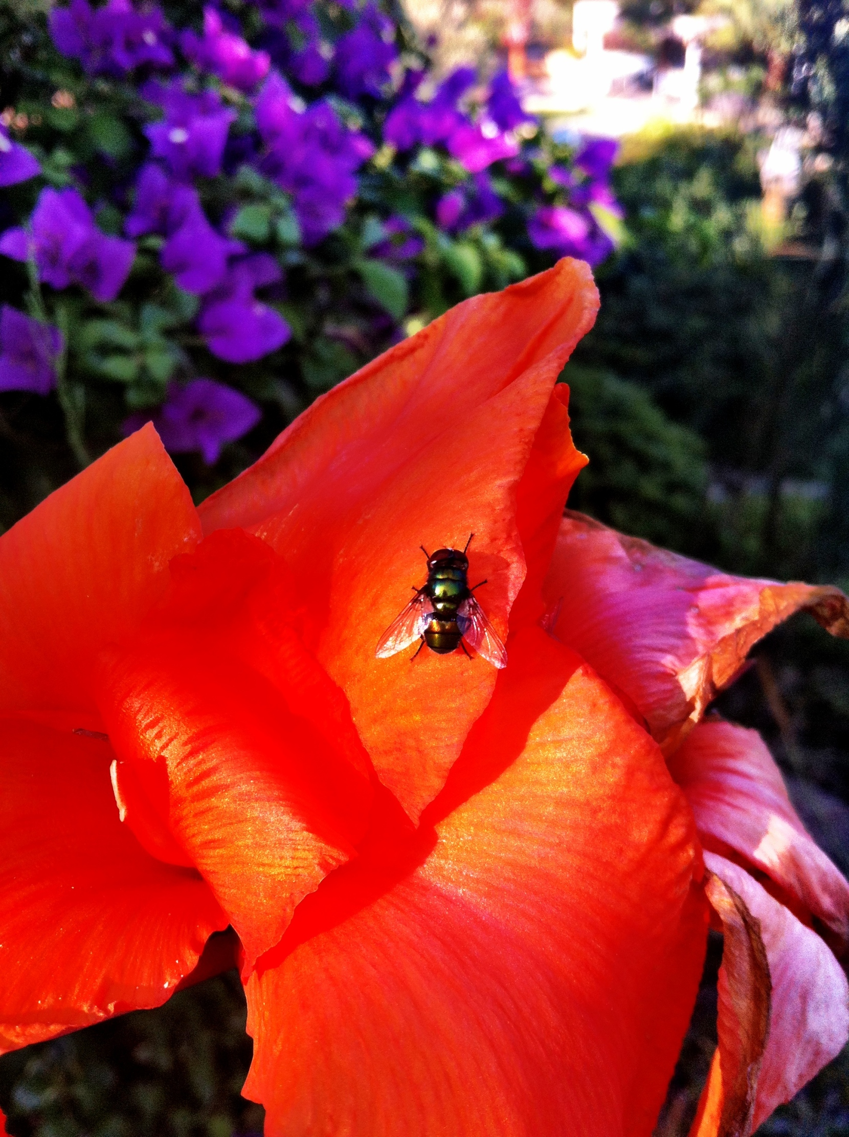 flower and the fly