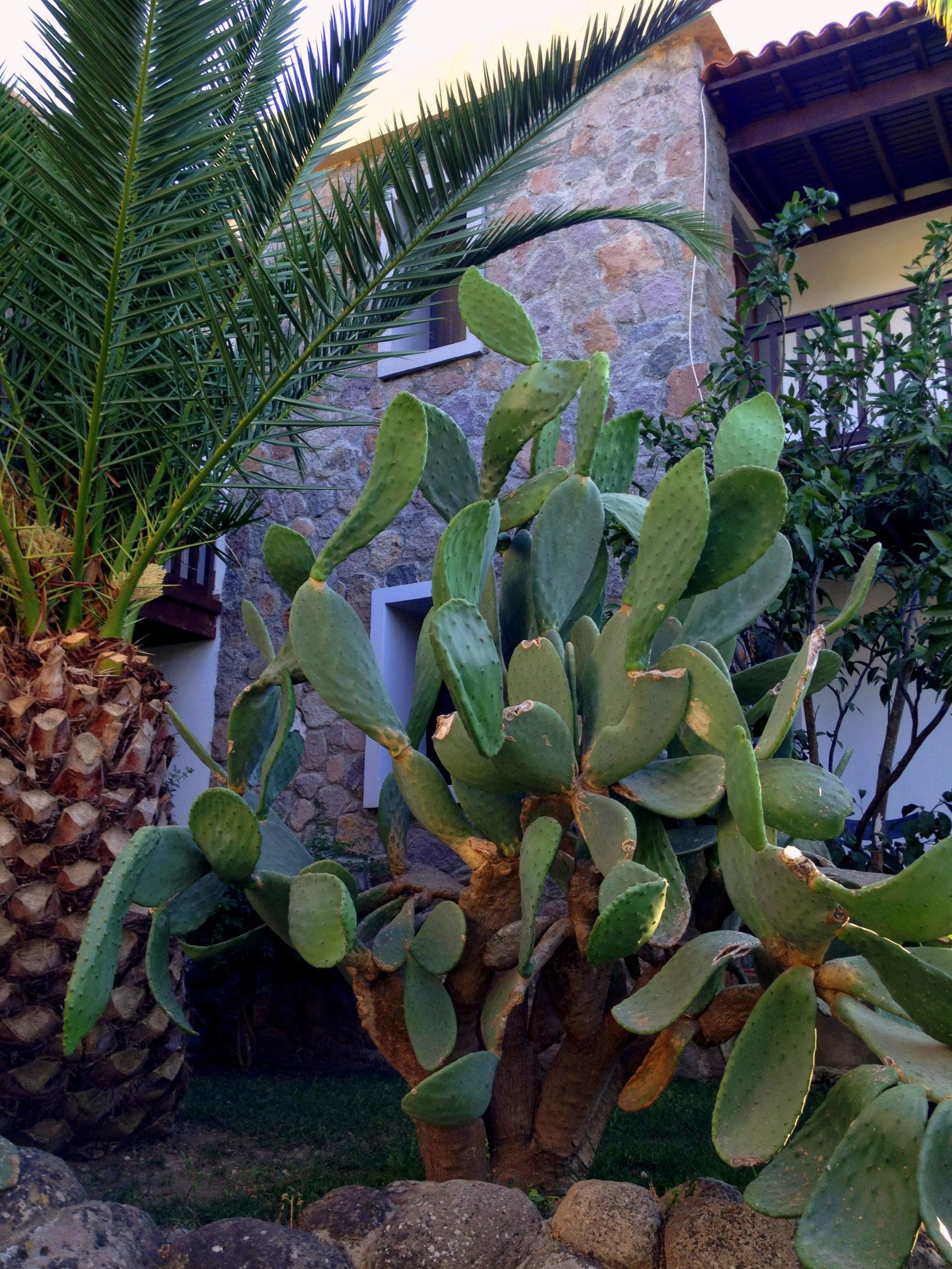 Lush Gardens of Bodrum