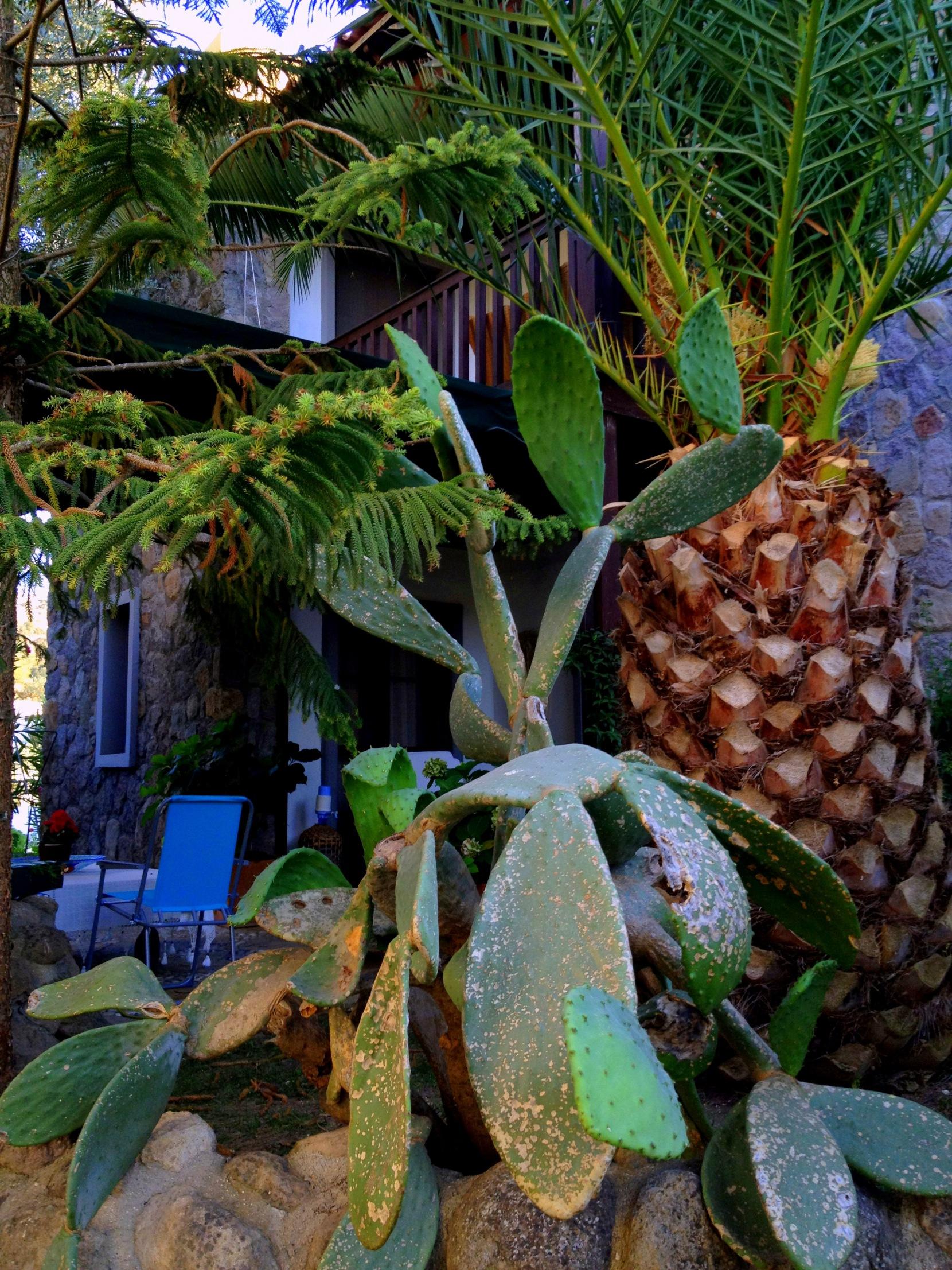 Cactus and Palmtree