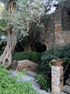 Olive tree, ada hotel